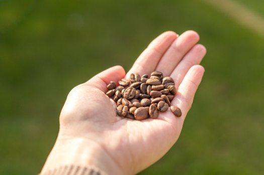 aroma-background-beans-927754.jpg