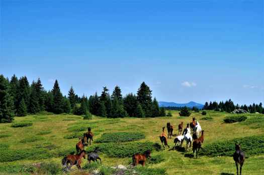 horses running on grass field towards trees